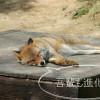 Firefoxが重たい?なら、Firefox Developer Editionを試してみては?