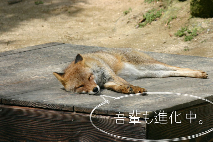 Firefox Developer Edition_7